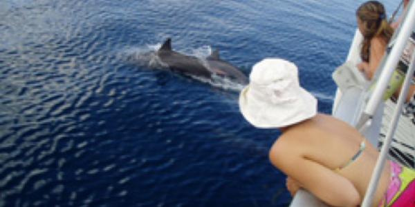 dolphins in tahiti