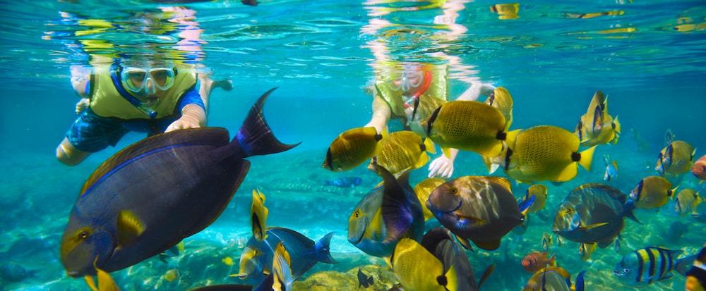 aulani reef lagoon