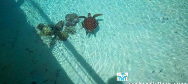 turtle-santuary-Le-Meridien-Bora