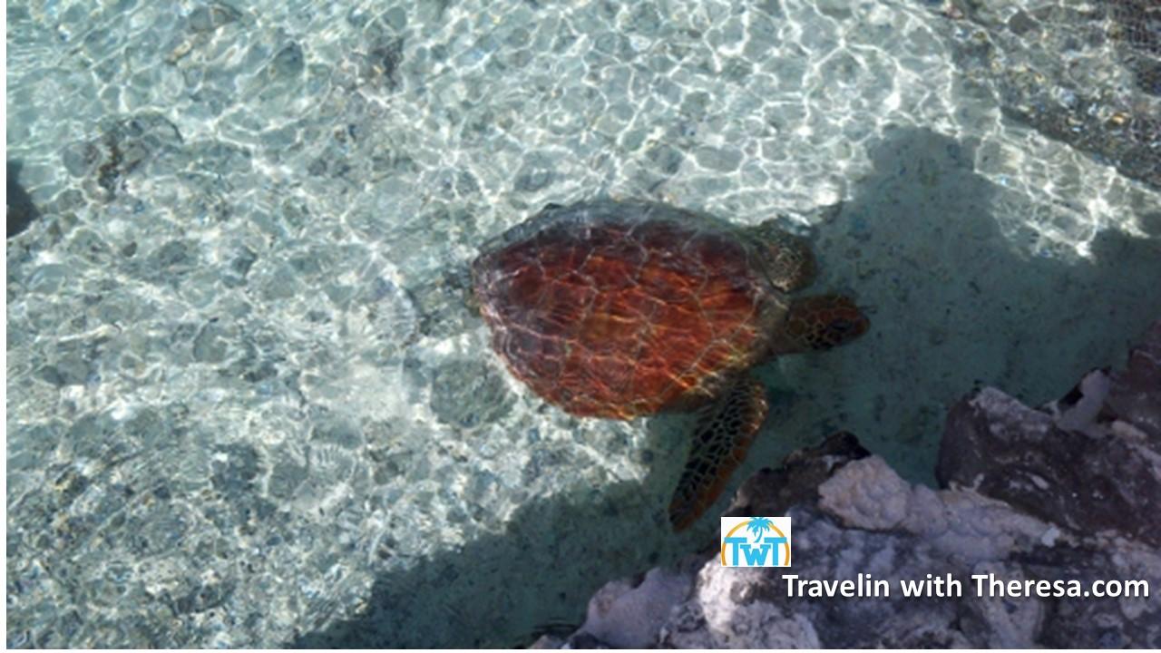 turtles-Le-Meridien-Bora
