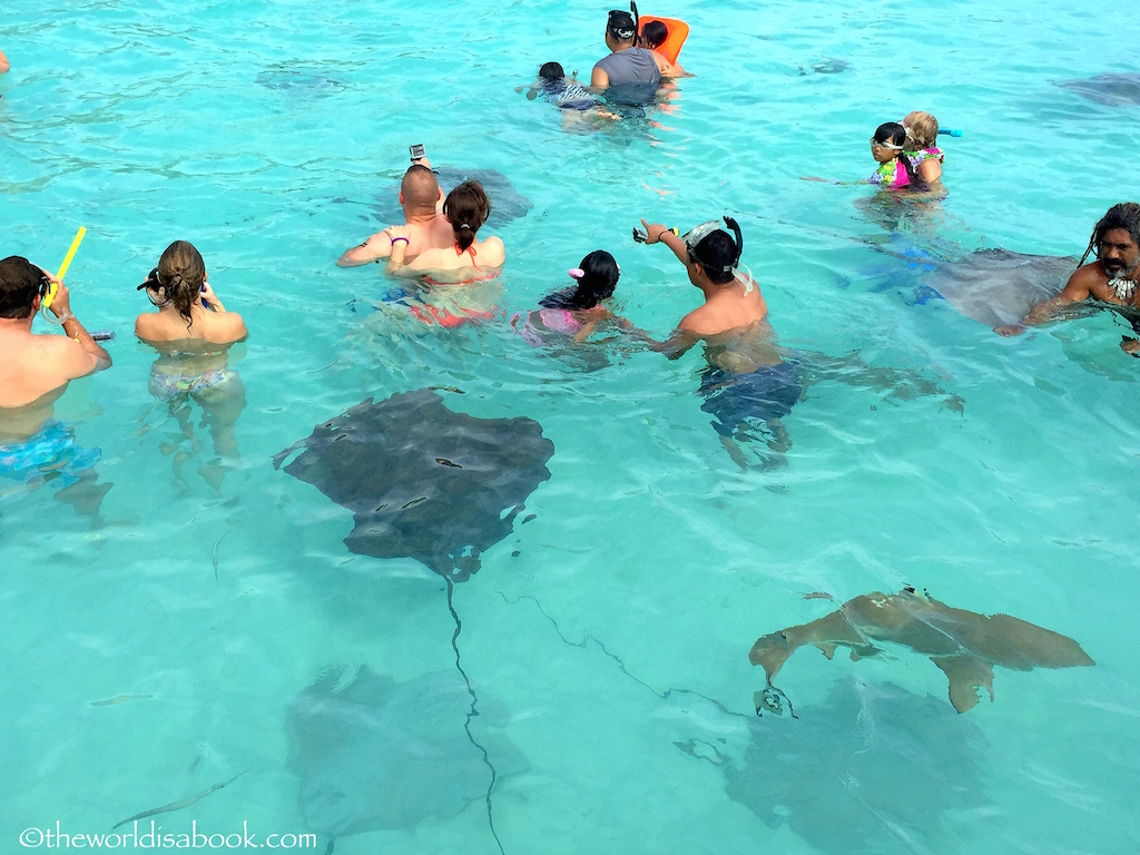 Moorea-snorkeling-with-stingrays