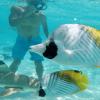 moorea jet ski fish