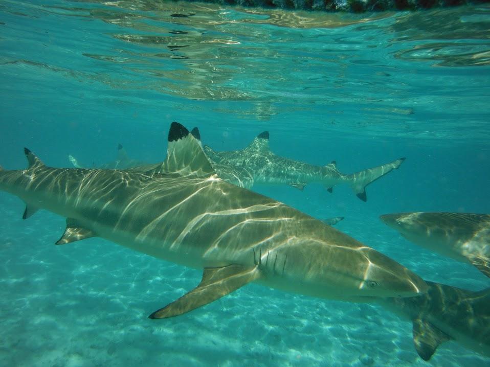 Combo 4X4 Safari Lunch and Shark and Ray