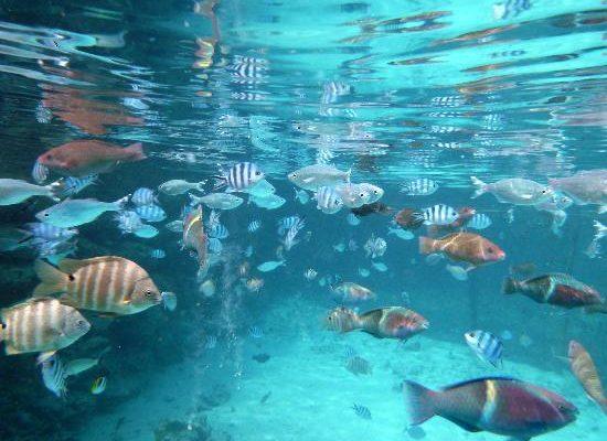 snorkeling-at-st-regis