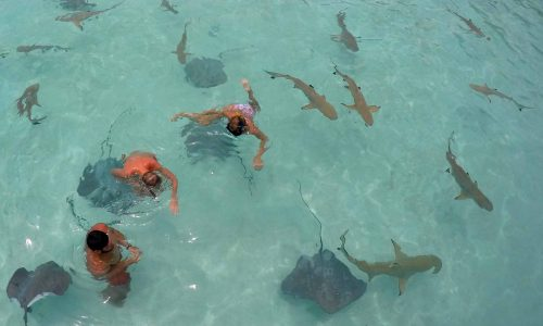 Moorea Stingray excursion